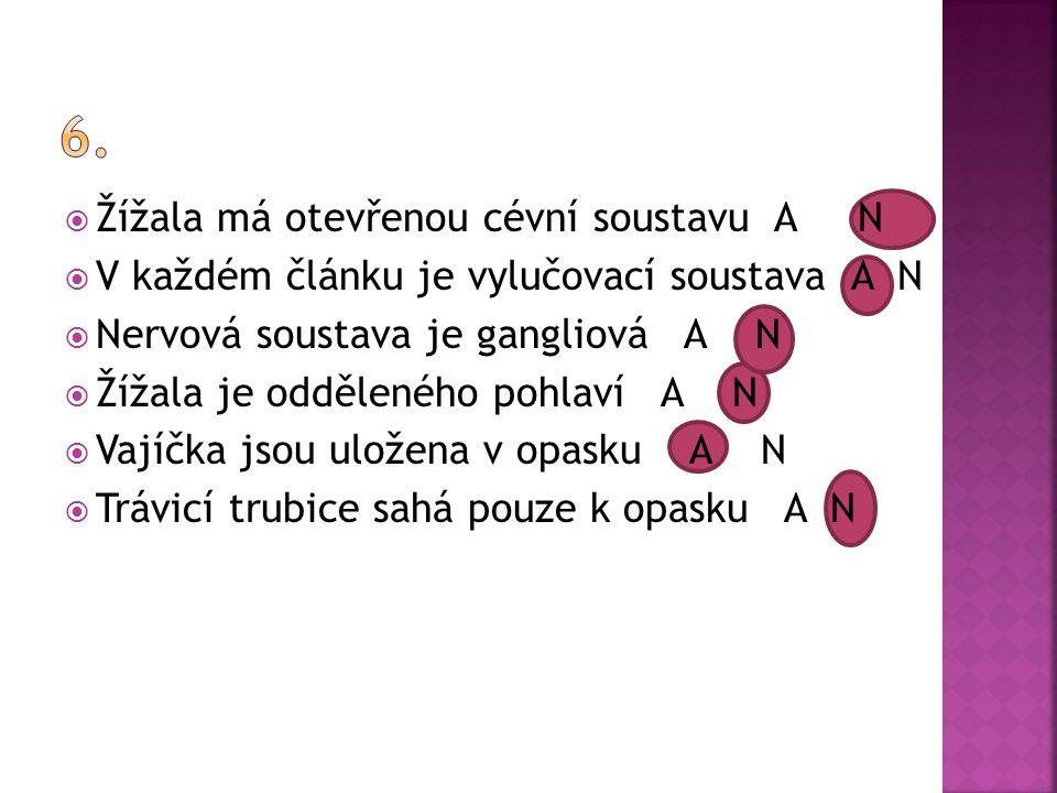 6. Žížala má otevřenou cévní soustavu A N