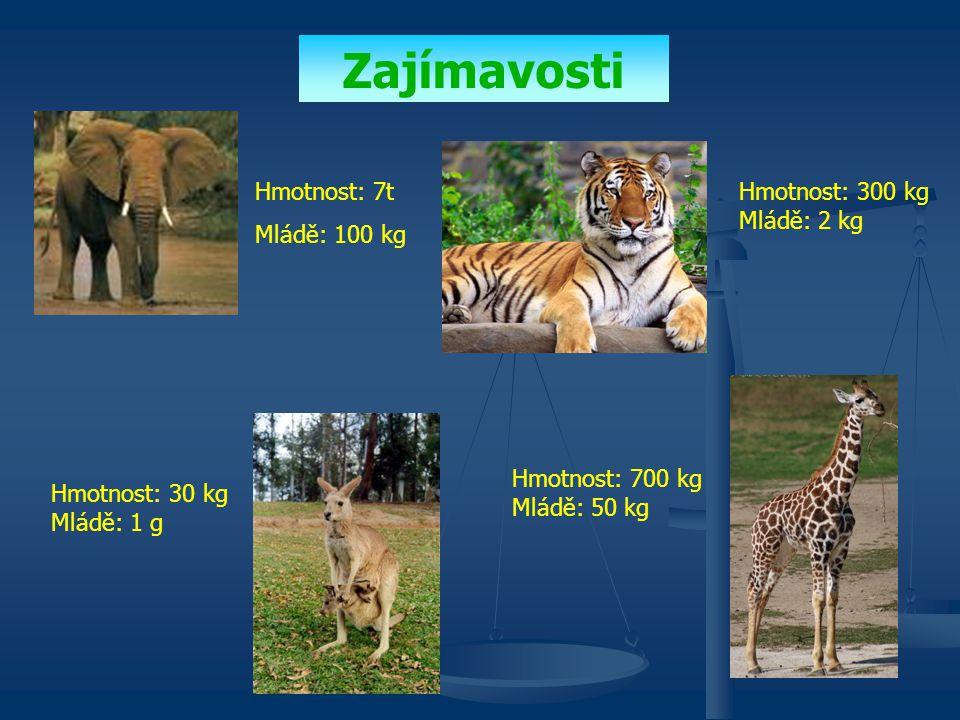 Zajímavosti Hmotnost: 7t Mládě: 100 kg Hmotnost: 300 kg Mládě: 2 kg