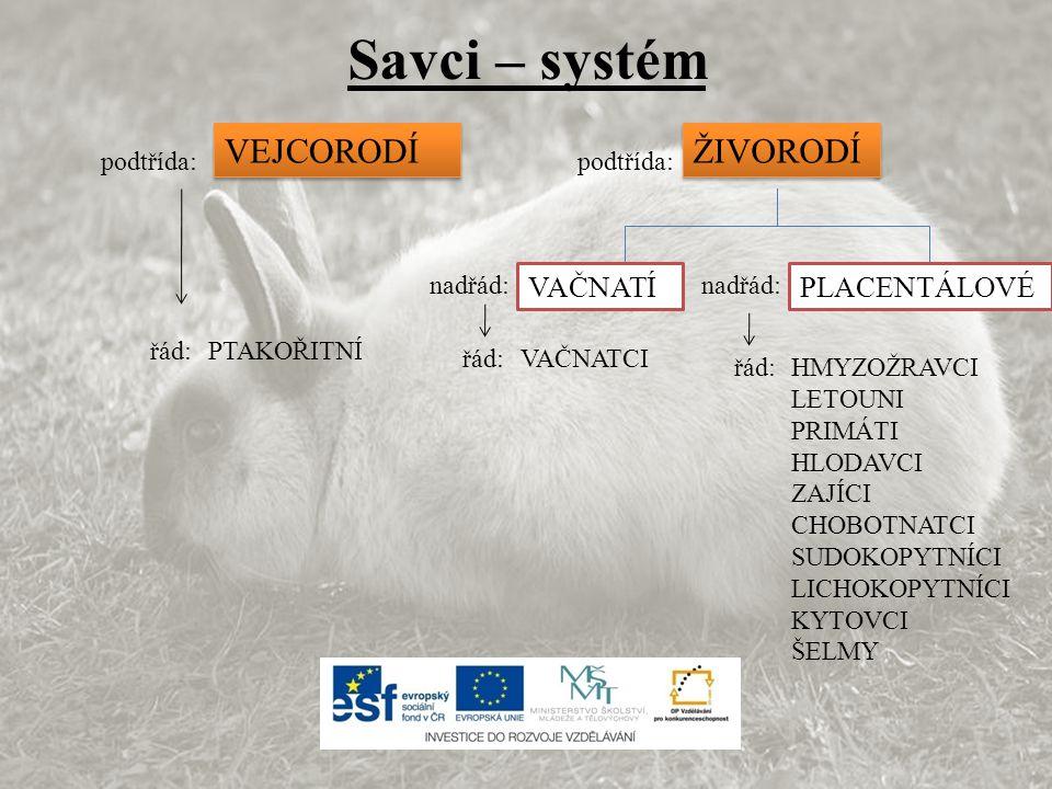 Savci – systém VEJCORODÍ ŽIVORODÍ VAČNATÍ PLACENTÁLOVÉ podtřída: