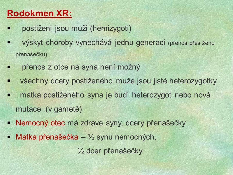 Rodokmen XR: postiženi jsou muži (hemizygoti)