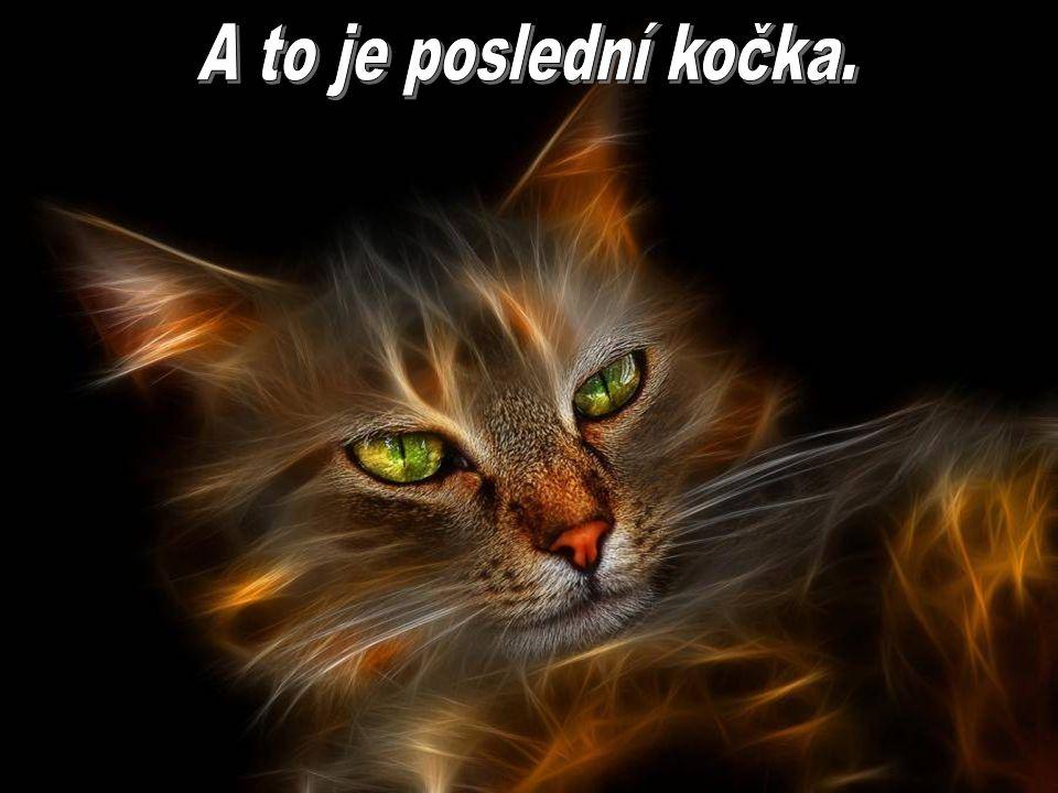 A to je poslední kočka.