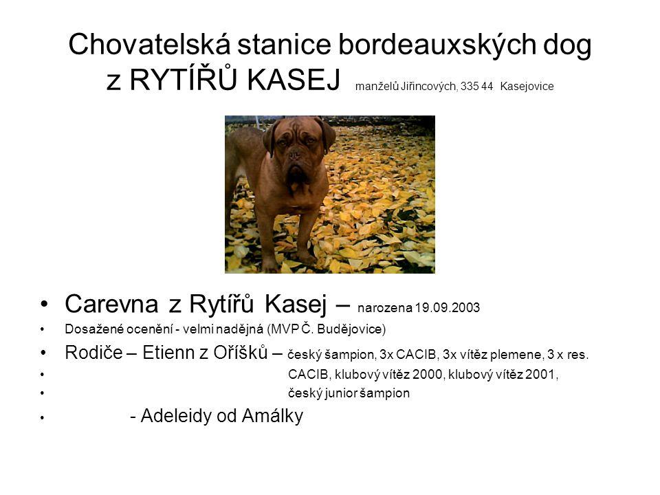 Chovatelská stanice bordeauxských dog z RYTÍŘŮ KASEJ manželů Jiřincových, 335 44 Kasejovice