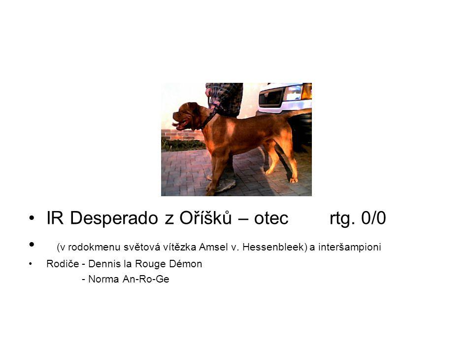 IR Desperado z Oříšků – otec rtg. 0/0