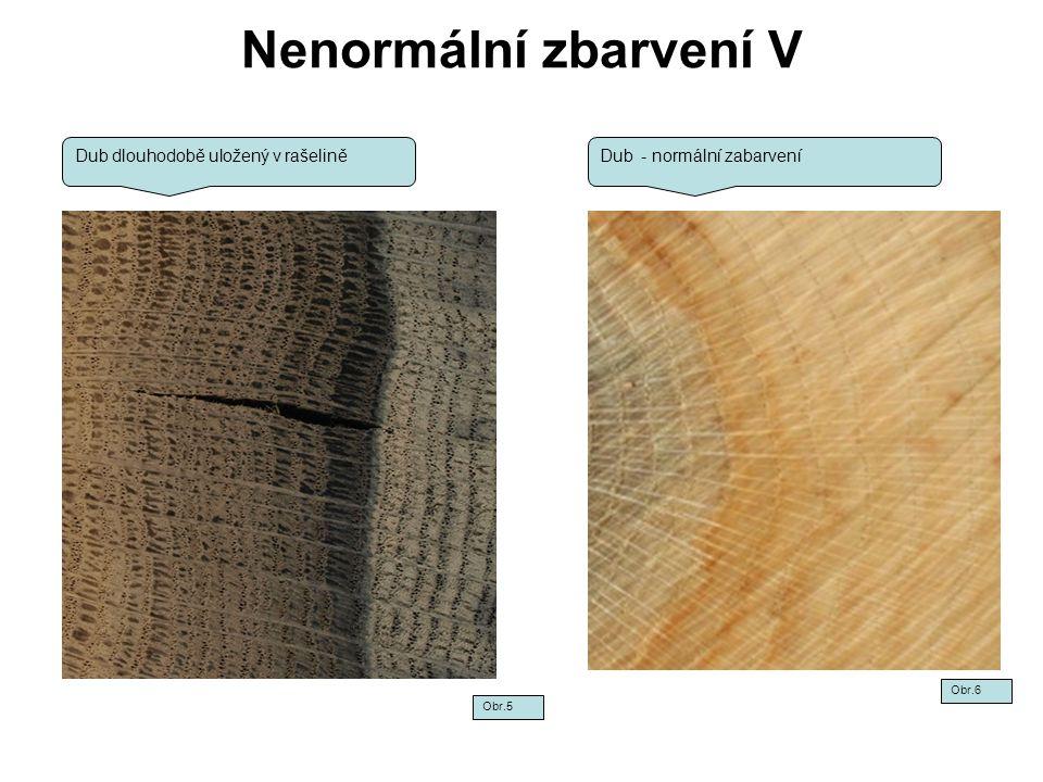 Nenormální zbarvení V Dub dlouhodobě uložený v rašelině