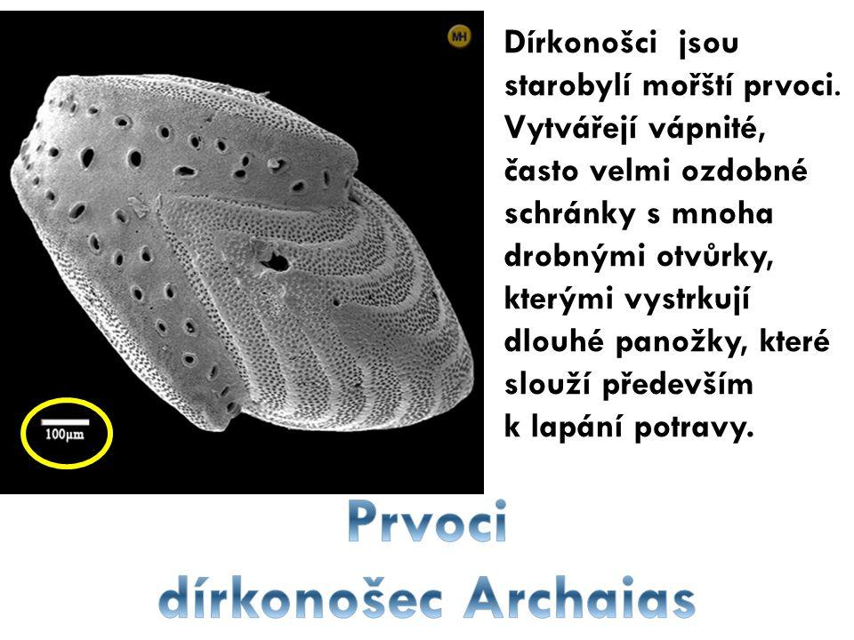 Prvoci dírkonošec Archaias