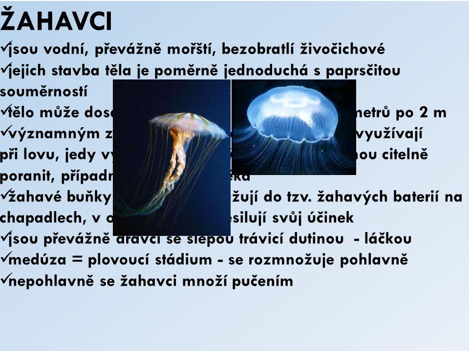 ŽAHAVCI jsou vodní, převážně mořští, bezobratlí živočichové