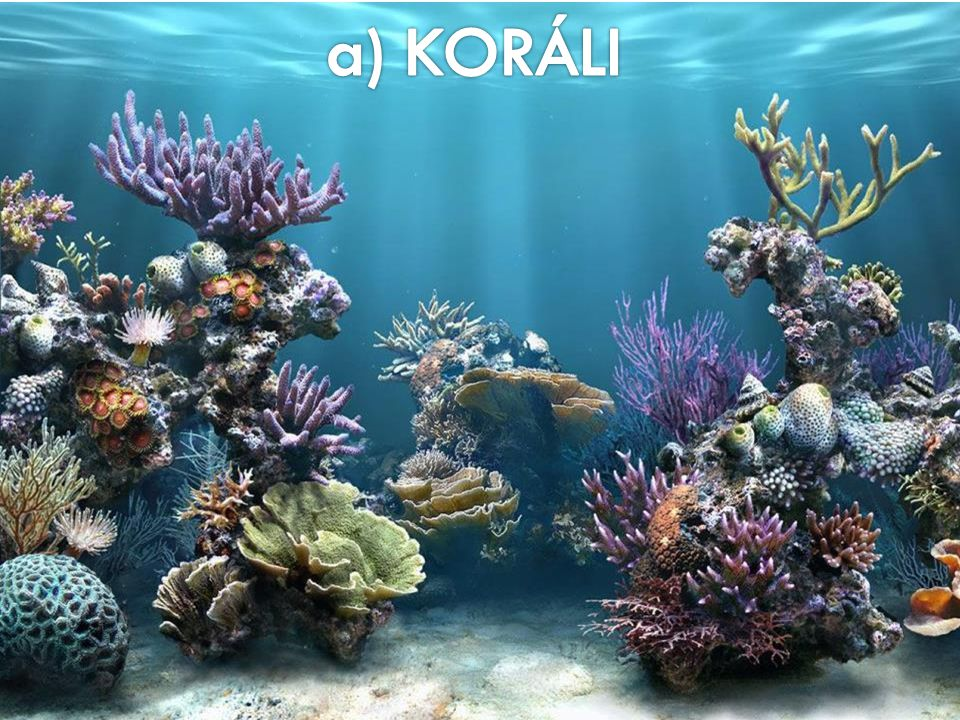 a) KORÁLI