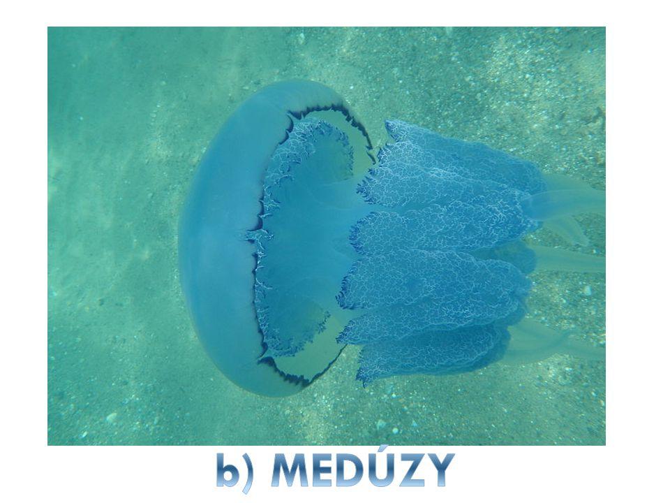 b) MEDÚZY