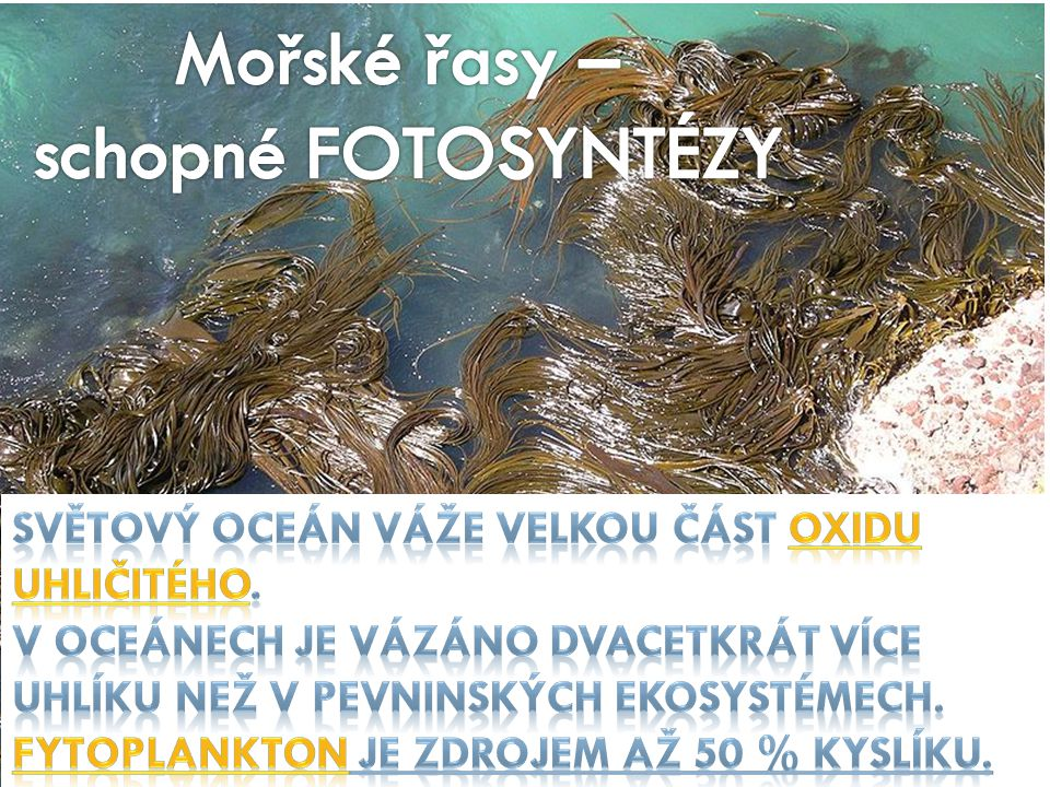 Mořské řasy – schopné FOTOSYNTÉZY