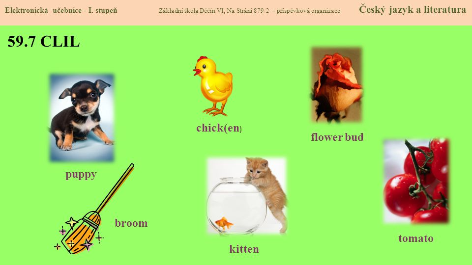 59.7 CLIL chick(en) flower bud puppy broom tomato kitten