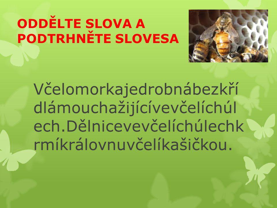 ODDĚLTE SLOVA A PODTRHNĚTE SLOVESA
