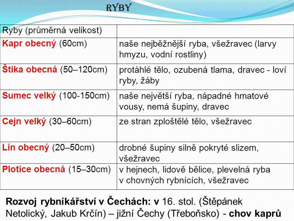 Ryby Ryby (průměrná velikost) Kapr obecný (60cm) naše nejběžnější ryba, všežravec (larvy hmyzu, vodní rostliny)