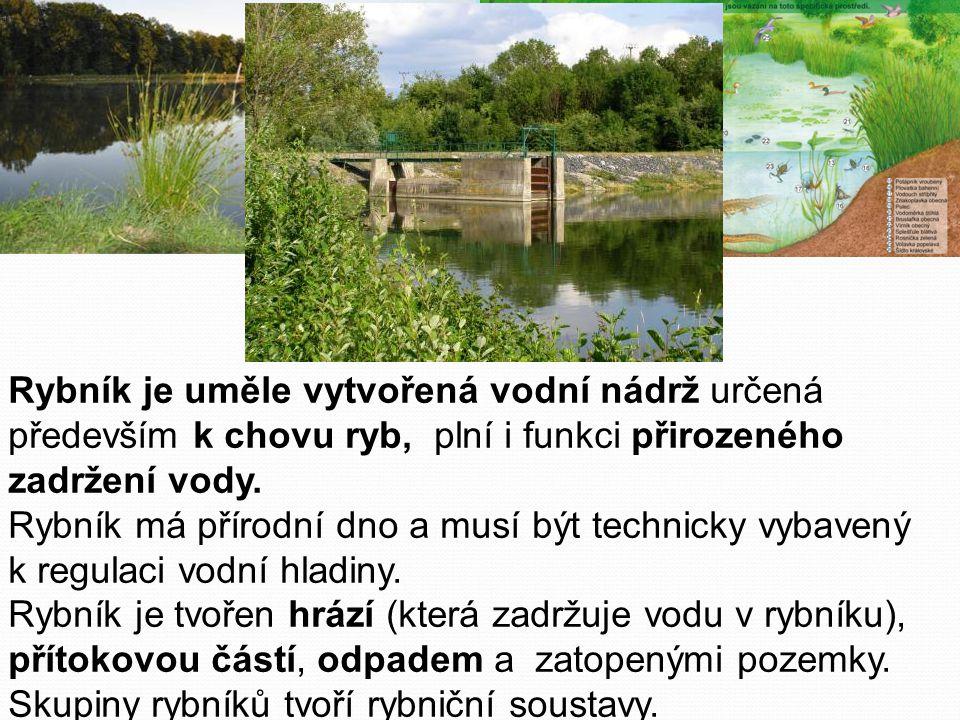Rybník je uměle vytvořená vodní nádrž určená především k chovu ryb, plní i funkci přirozeného zadržení vody. Rybník má přírodní dno a musí být technicky vybavený k regulaci vodní hladiny. Rybník je tvořen hrází (která zadržuje vodu v rybníku), přítokovou částí, odpadem a zatopenými pozemky.