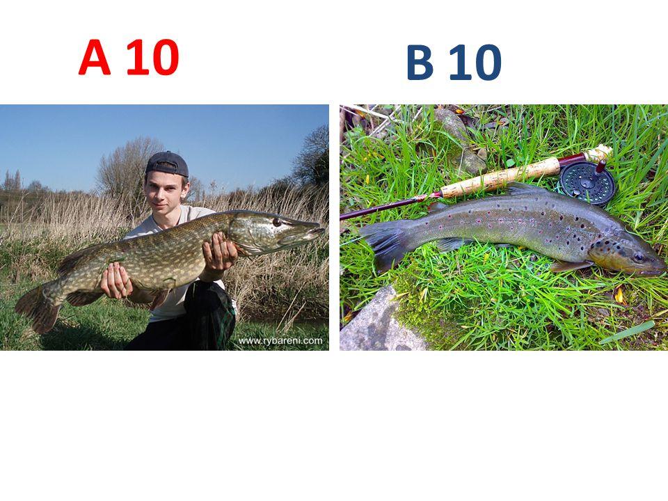 A B 10 A10: štika obecná B10 pstruh obecný