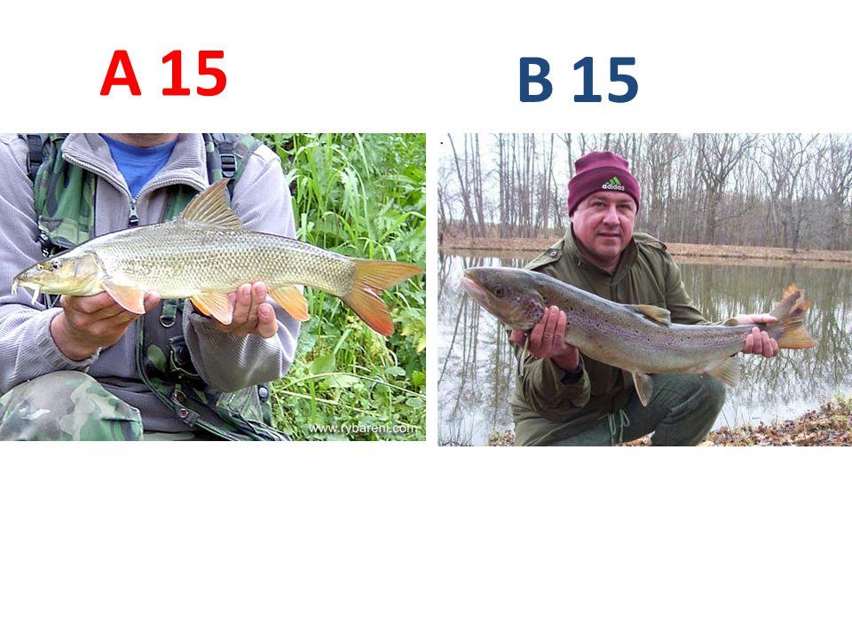 A B 15 A15: parma obecná B15: losos obecný