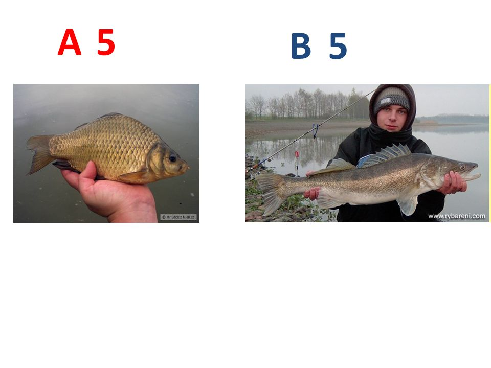 A B 5 A5: karas obecný http://www.mrk.cz/Data/Pics/2009/218751.jpg