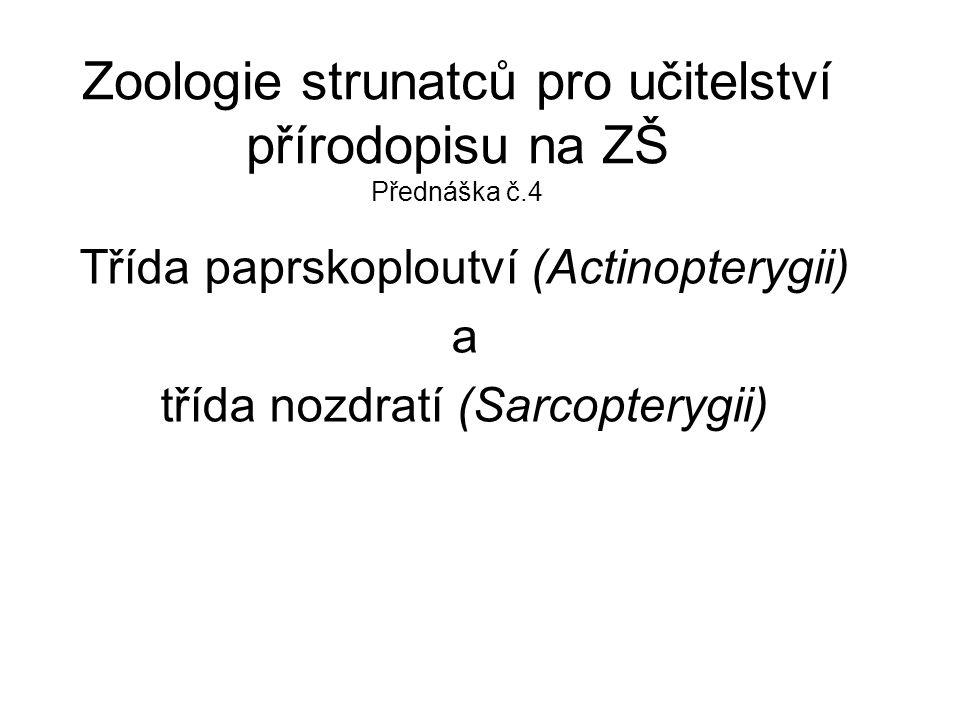 Zoologie strunatců pro učitelství přírodopisu na ZŠ Přednáška č.4