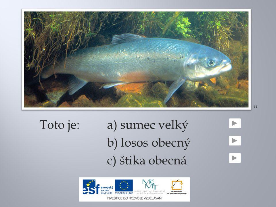 14 Toto je: a) sumec velký b) losos obecný c) štika obecná