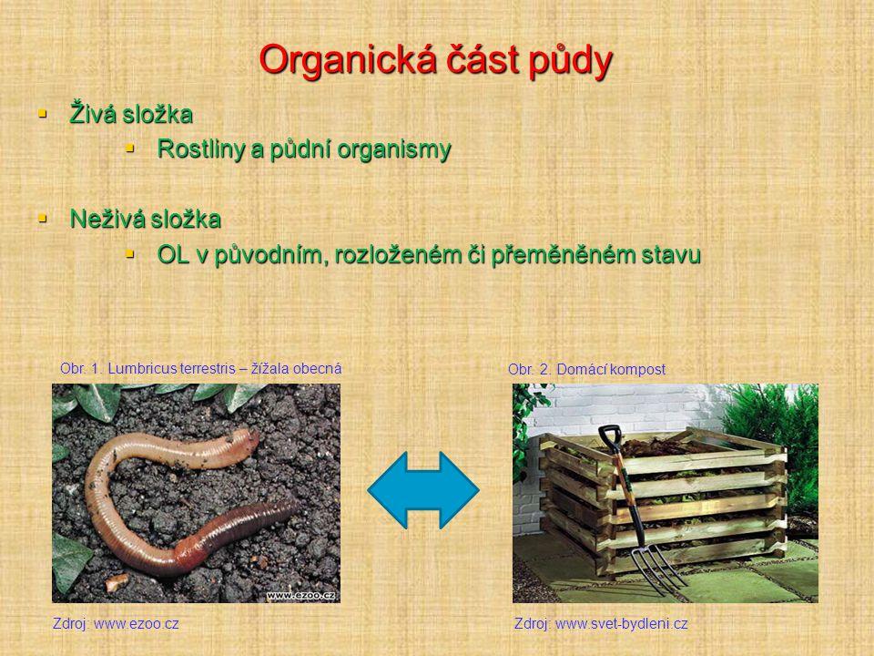 Organická část půdy Živá složka Rostliny a půdní organismy