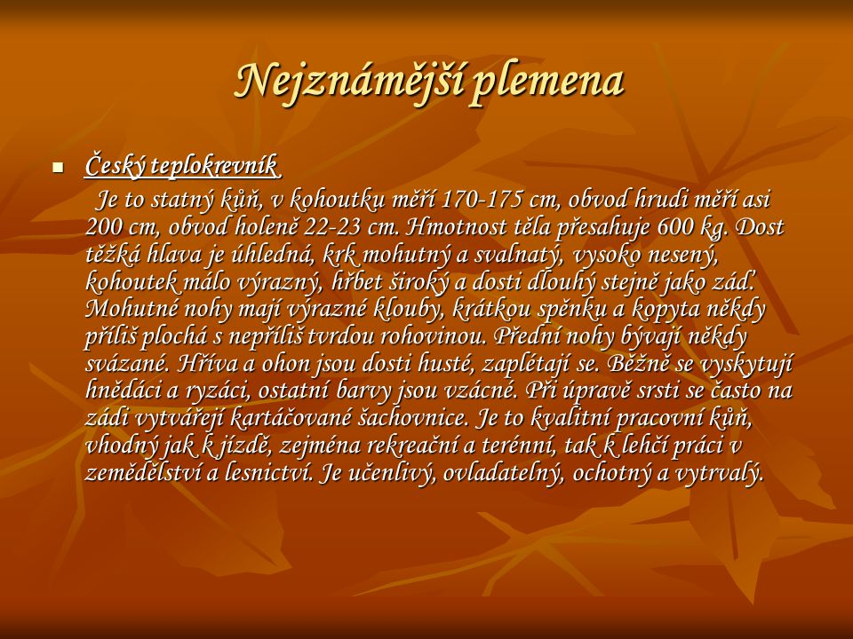 Nejznámější plemena Český teplokrevník