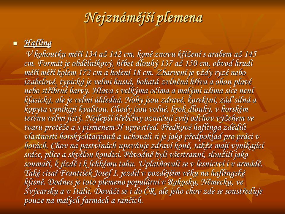 Nejznámější plemena Hafling