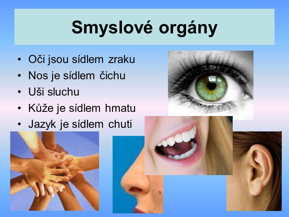 Smyslové orgány Oči jsou sídlem zraku Nos je sídlem čichu Uši sluchu