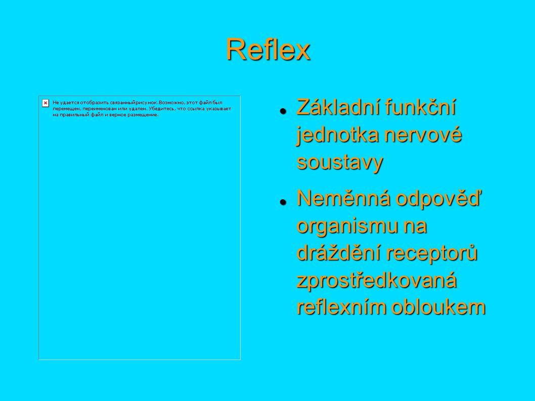 Reflex Základní funkční jednotka nervové soustavy