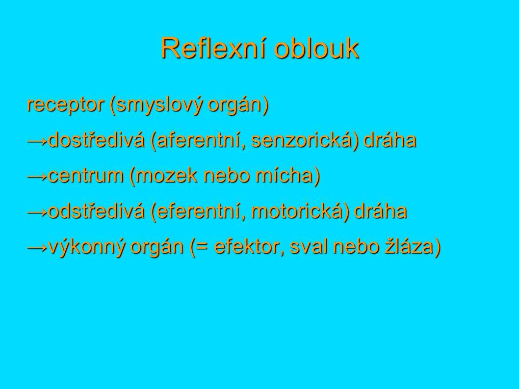 Reflexní oblouk receptor (smyslový orgán)