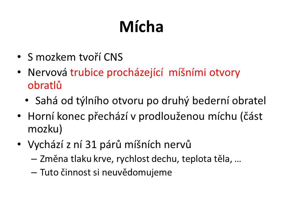 Mícha S mozkem tvoří CNS