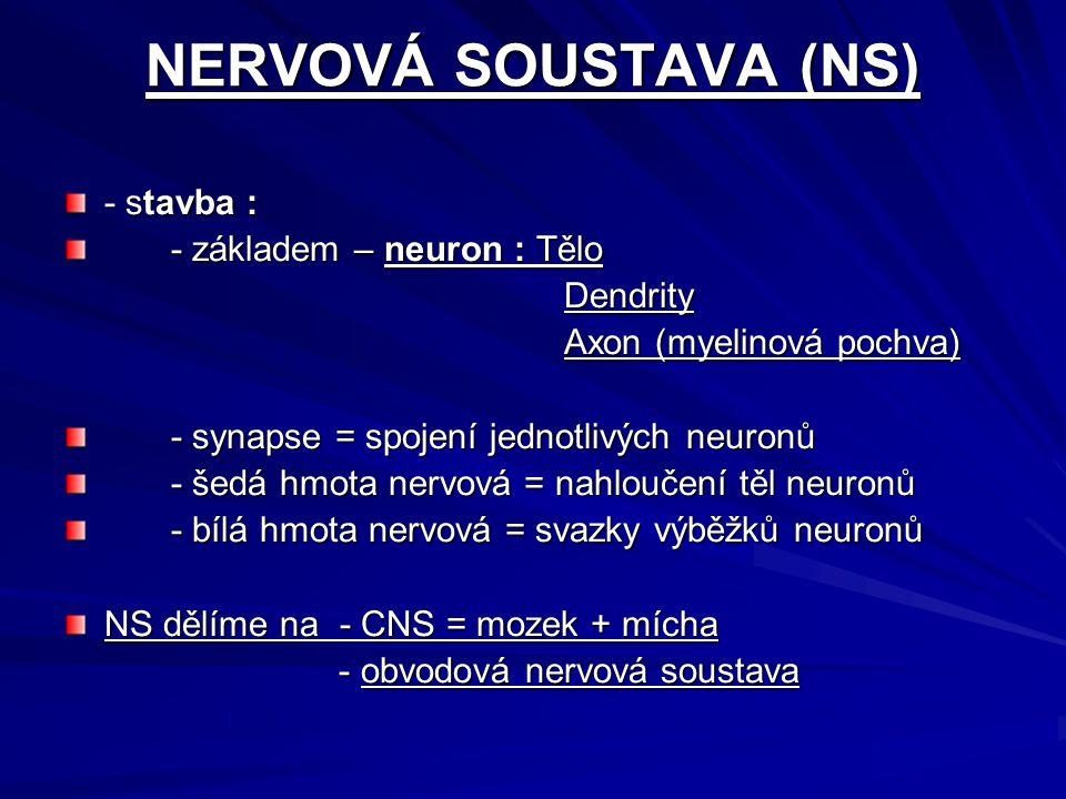 NERVOVÁ SOUSTAVA (NS) - stavba : - základem – neuron : Tělo Dendrity
