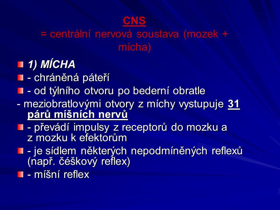 CNS = centrální nervová soustava (mozek + mícha)