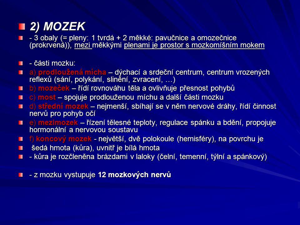 2) MOZEK - 3 obaly (= pleny: 1 tvrdá + 2 měkké: pavučnice a omozečnice (prokrvená)), mezi měkkými plenami je prostor s mozkomíšním mokem.