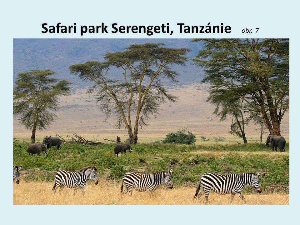 Safari park Serengeti, Tanzánie obr. 7