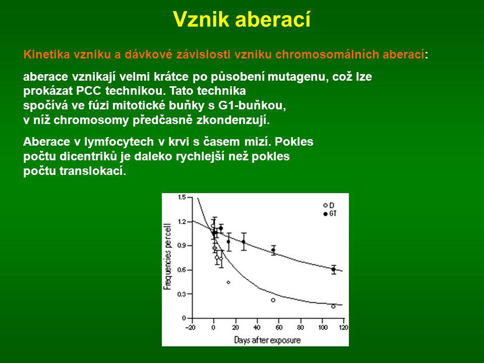 Vznik aberací Kinetika vzniku a dávkové závislosti vzniku chromosomálních aberací:
