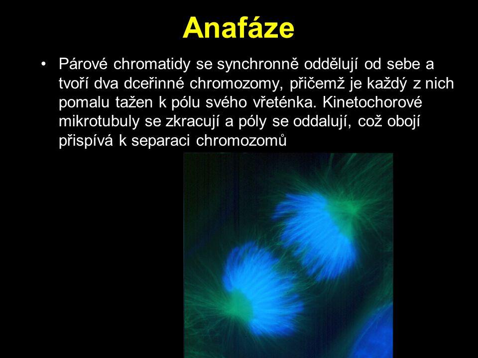 Anafáze