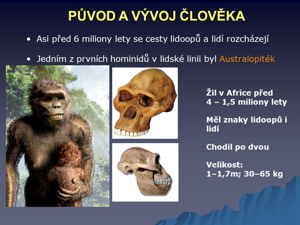 PŮVOD A VÝVOJ ČLOVĚKA Velikost mozkovny: 400 – 520 cm3. Používal jednoduché nástroje. Asi před 6 miliony lety se cesty lidoopů a lidí rozcházejí.