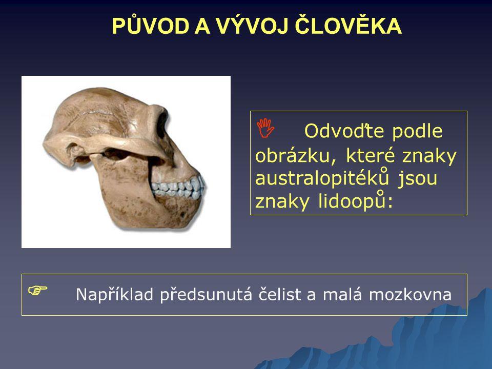  Například předsunutá čelist a malá mozkovna