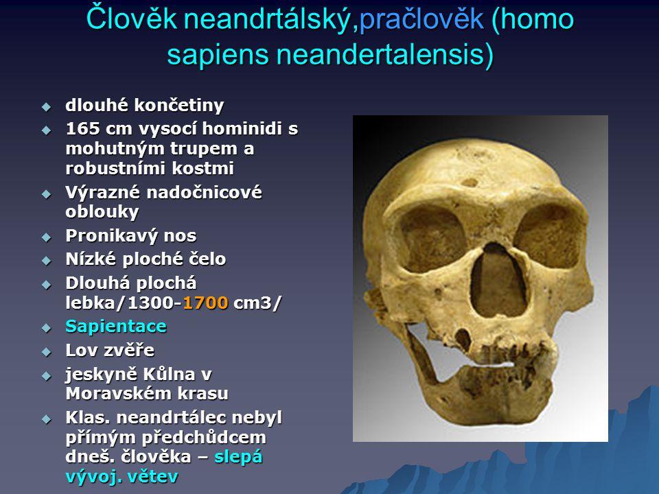 Člověk neandrtálský,pračlověk (homo sapiens neandertalensis)
