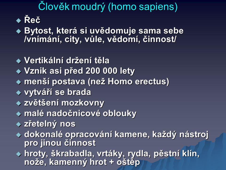Člověk moudrý (homo sapiens)