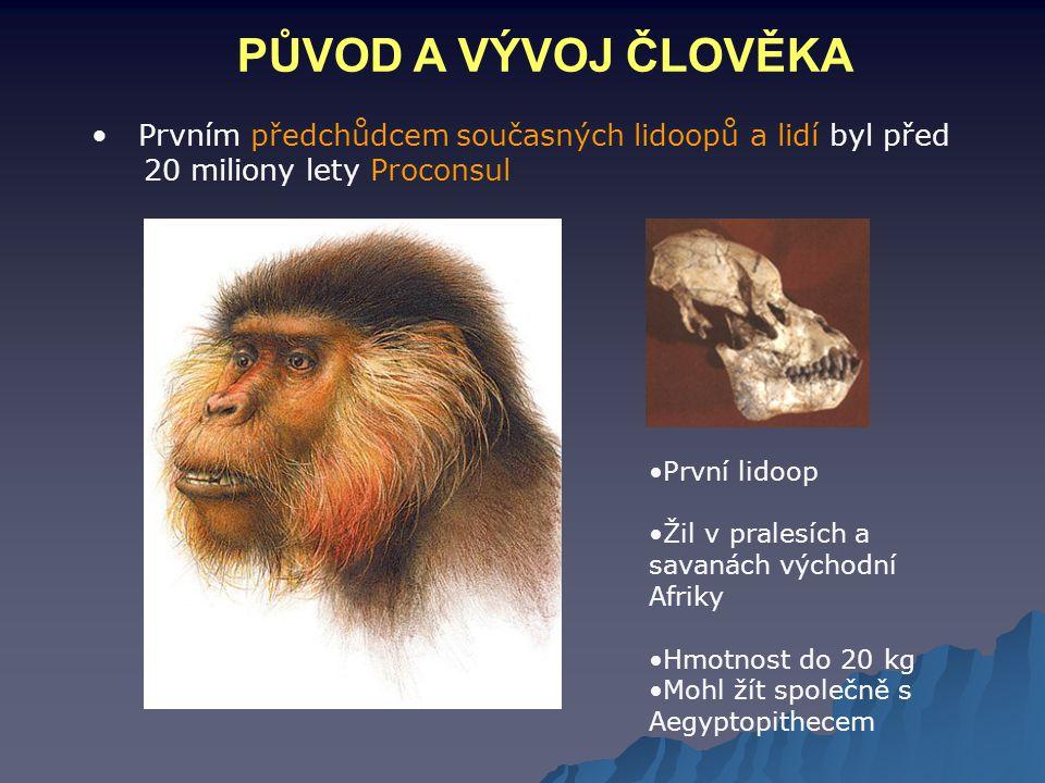 PŮVOD A VÝVOJ ČLOVĚKA Prvním předchůdcem současných lidoopů a lidí byl před 20 miliony lety Proconsul.