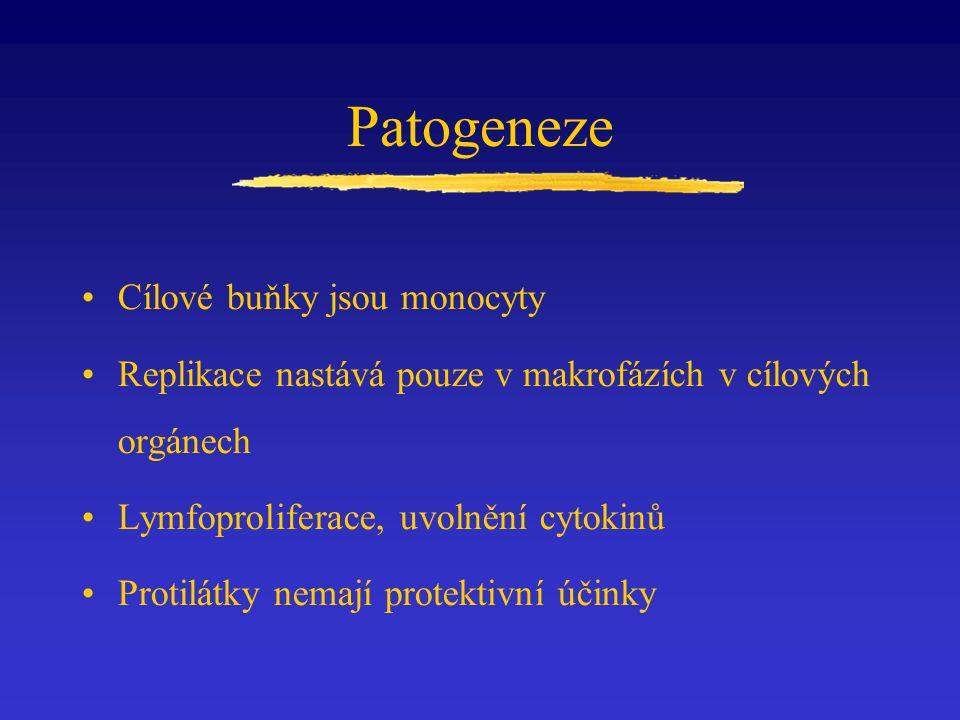 Patogeneze Cílové buňky jsou monocyty