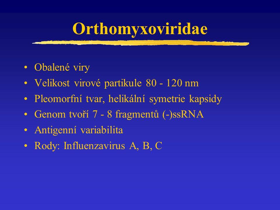 Orthomyxoviridae Obalené viry Velikost virové partikule 80 - 120 nm