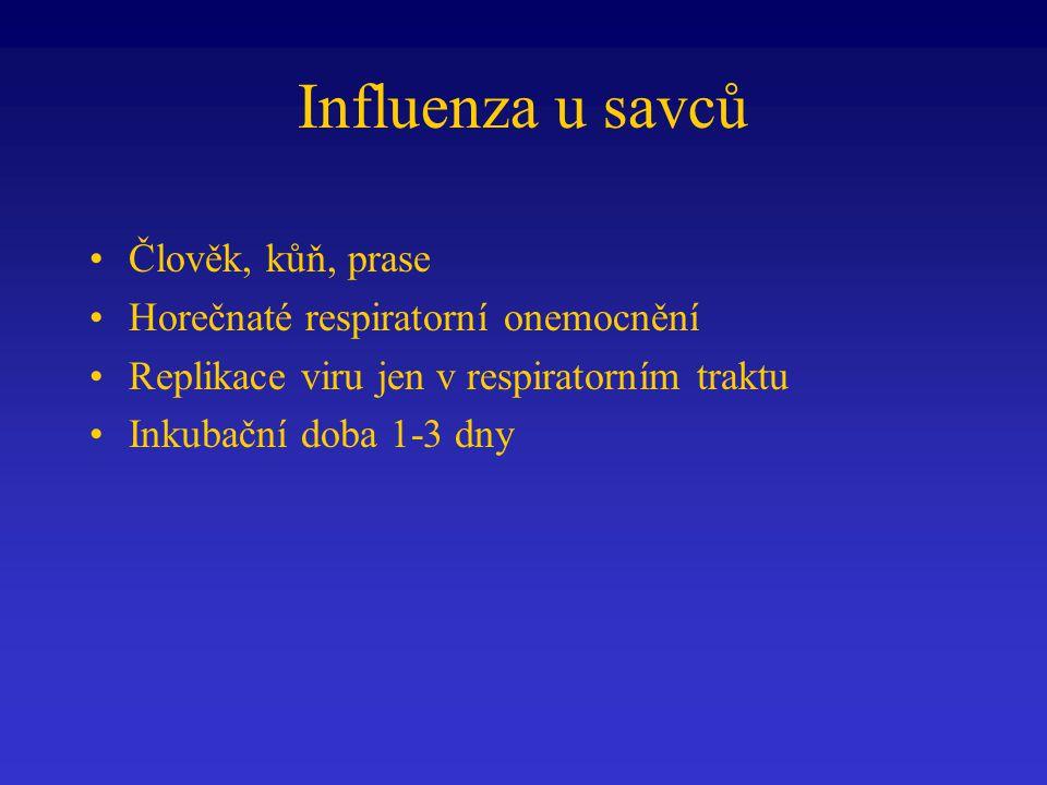 Influenza u savců Člověk, kůň, prase Horečnaté respiratorní onemocnění