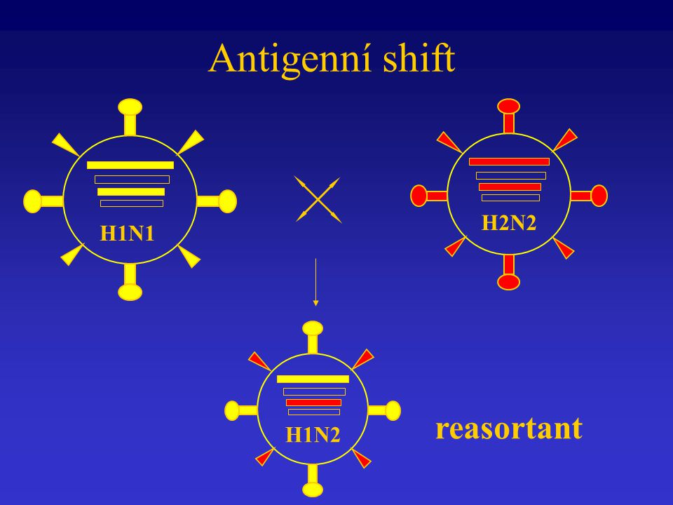 Antigenní shift H2N2 H1N1 reasortant H1N2
