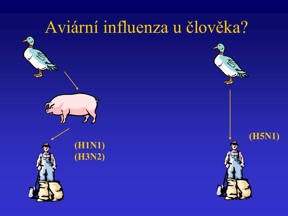 Aviární influenza u člověka