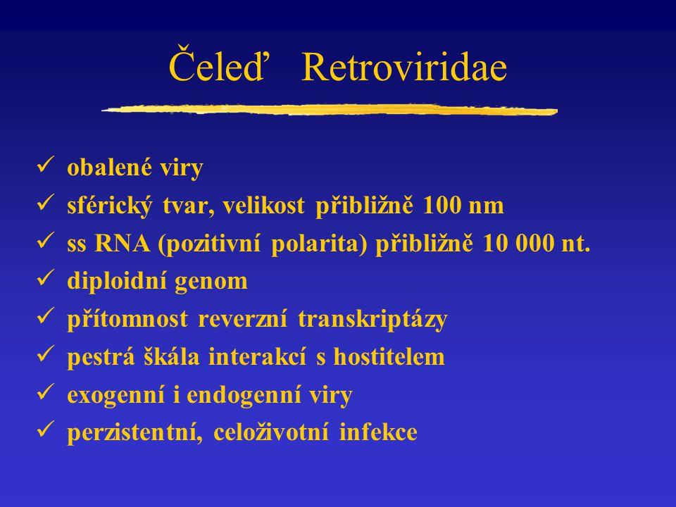 Čeleď Retroviridae obalené viry