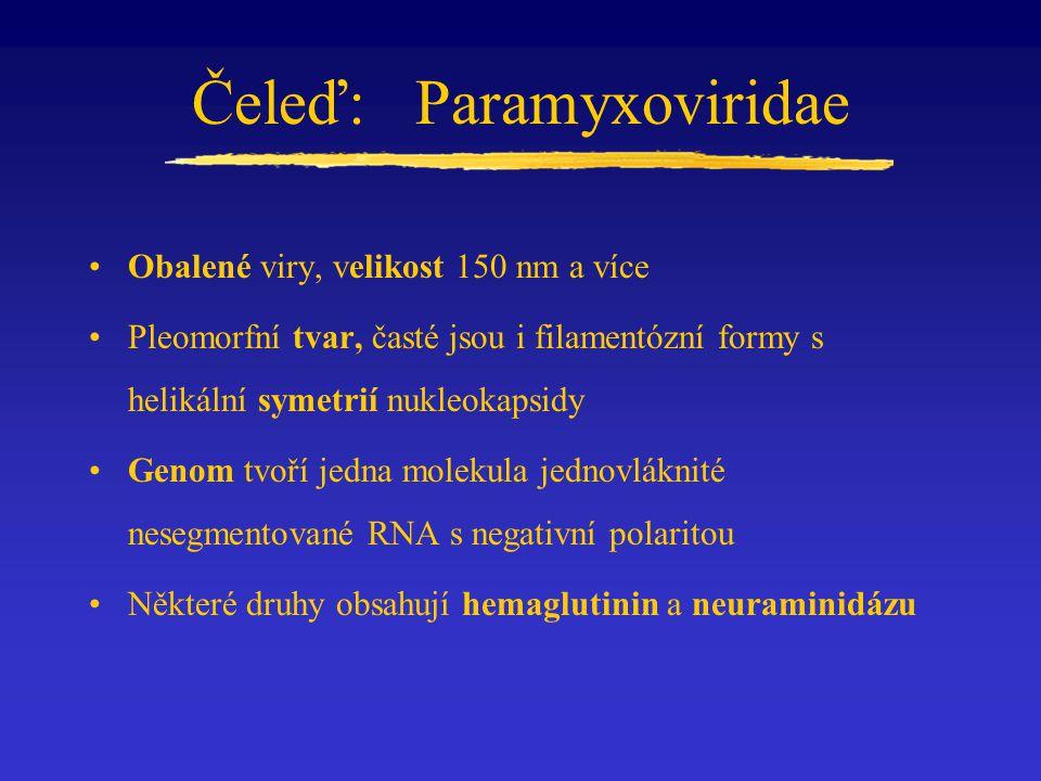 Čeleď: Paramyxoviridae