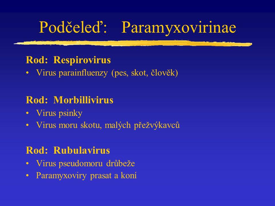 Podčeleď: Paramyxovirinae