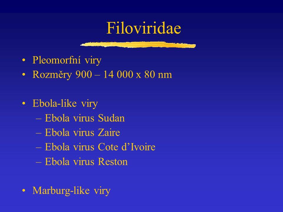 Filoviridae Pleomorfní viry Rozměry 900 – 14 000 x 80 nm