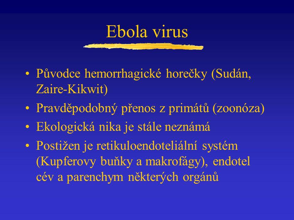 Ebola virus Původce hemorrhagické horečky (Sudán, Zaire-Kikwit)